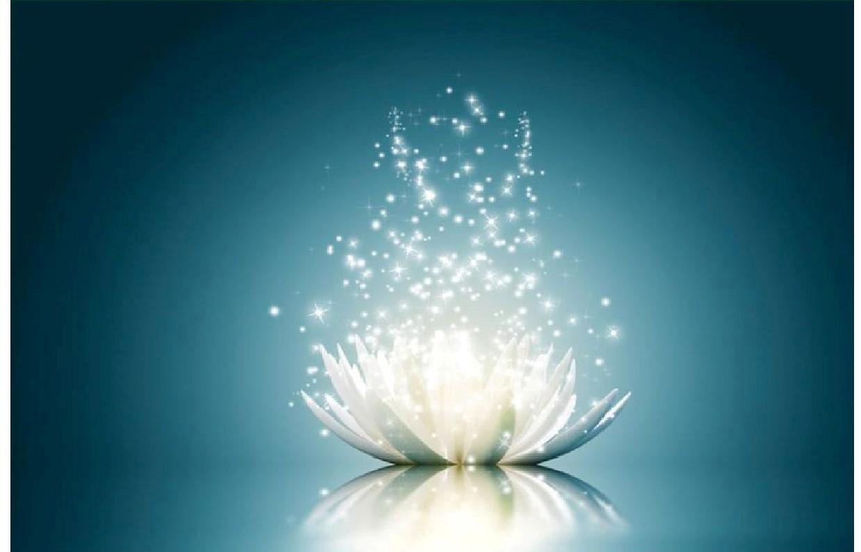 Lotus magnetisme